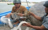 Đổ xô săn tìm cá cắn người tắm biển