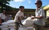 Thêm 3.620 tấn gạo hỗ trợ dân dịp tết và giáp hạt