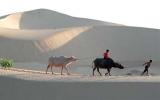 Về nơi gió cát