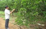 Vì sao 63 hộ nông dân ở Hiếu Liêm chưa được cấp sổ đỏ?