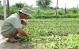 Đầu ra cho nông sản: Cần sự liên kết chặt chẽ