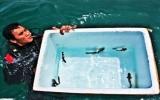 Vinpearl Land thả về biển 25 con cá mập mèo con