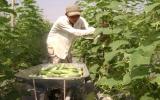 Xã Vĩnh Tân (Tân Uyên): Điển hình trong công tác giảm nghèo