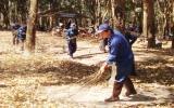 Công ty TNHH MTV Cao su Dầu Tiếng : Đẩy mạnh công tác phòng cháy vườn cây