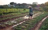 Từ 15/5, miễn giảm thuế sử dụng đất nông nghiệp
