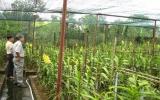 Thanh niên nông thôn Bình Dương: Thích nghi thị trường, làm kinh tế giỏi