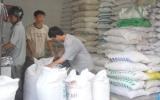 Hỗ trợ 11.657 tấn gạo cho người dân dịp giáp hạt
