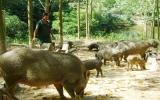 Kinh tế trang trại Phú Giáo: Phát triển chiều sâu, sản xuất hàng hóa