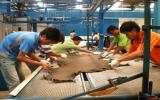 Bảo vệ môi trường bằng cây tre Việt Nam