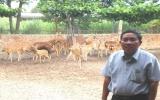 Model of raising deer, stags for horn brings hi-economic efficiency