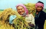 Nông nghiệp Việt Nam: Lực đỡ quan trọng của nền kinh tế