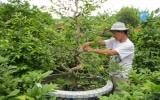 Nông dân phường Phú Lợi (TX.TDM) thi đua làm kinh tế giỏi