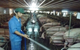 Bảo hiểm nông nghiệp: Làm gì để chủ trương đi vào thực tế?