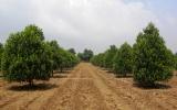 Xây dựng đề cương thực hiện dự án đầu tư phát triển vườn cây ăn trái