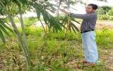 Phát triển kinh tế gia đình bằng mô hình trồng tre lấy măng