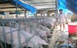 Cựu chiến binh Nguyễn Văn Đem: Làm kinh tế giỏi từ lòng kiên trì