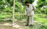Đồng bào Chăm xã Minh Hòa (Dầu Tiếng): Chuyển dịch cơ cấu cây trồng hiệu quả
