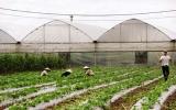 Khu nông nghiệp công nghệ cao An Thái (Phú Giáo): Trồng rau sạch đạt năng suất 100 tấn/ha