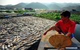 Bí ẩn cá chết hàng loạt ở Trung Quốc