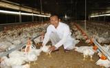 Xã Minh Hòa (Dầu Tiếng): Phát triển mạnh mô hình nuôi gà lạnh