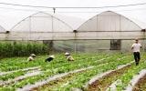 Khu nông nghiệp công nghệ cao An Thái: Điểm sáng trong sản xuất nông nghiệp