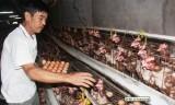 Lão nông tay trắng gây dựng trang trại thu 800 triệu đồng một năm