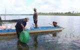 Thả bổ sung 245kg cá giống và 7.500 con cá lóc xuống hồ Cần Nôm