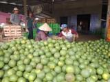 Hội Nông dân huyện Bắc Tân Uyên: Đưa chủ trương, chính sách xây dựng nông thôn mới vào cuộc sống