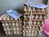 Một hộ kinh doanh ở TP.Thuận An tặng 1.000 thùng mì và 10.000 quả trứng ủng hộ phòng chống Covid-19