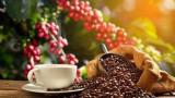 咖啡旅游为越南农业旅游发展带来新机遇