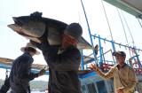 Vietnam becomes largest tuna exporter of Israel