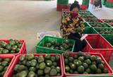 Tạo điều kiện lưu thông, tiêu thụ nông sản