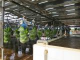 Tìm giải pháp thúc đẩy chuỗi sản xuất, tiêu thụ nông sản
